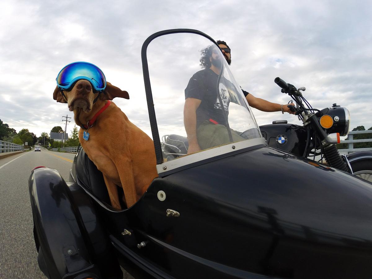 A Dog wearing gogles