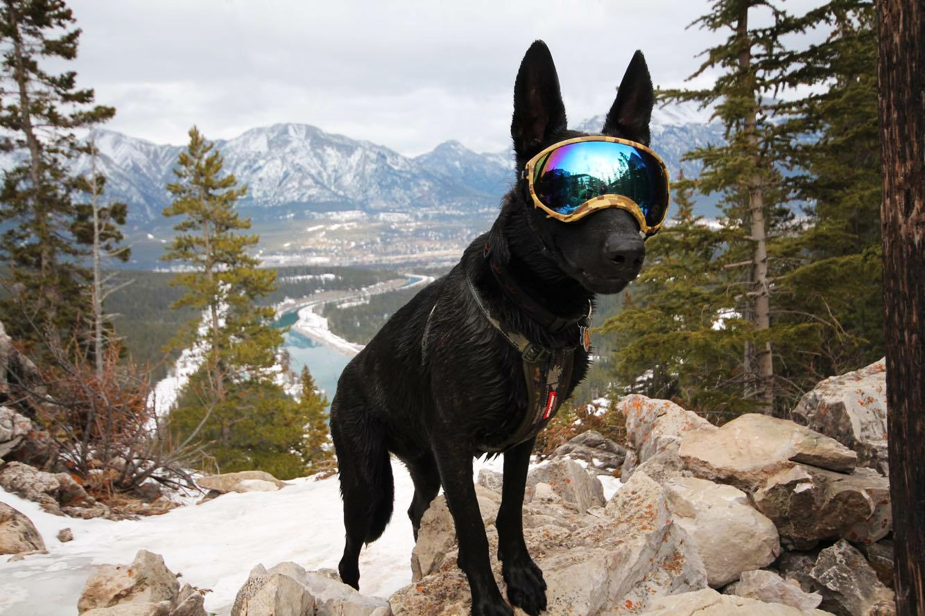 Another Dog with Goggles